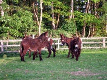 Der Haustierpark bietet eine vielfältige Tierwelt