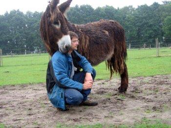 Die  Neugestaltung der Mensch-Tier-Beziehung