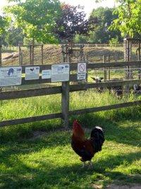 Im Haustierpark gibt es viele Informationen zu den einzelnen Tierarten
