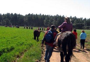 Grosse Eselwanderung im Rahmen des Zuchtkongresses in San Vitero