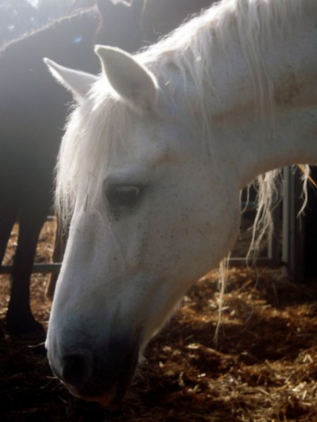 MIRAMIS - Beates erstes Pferd, † Ostern 2011